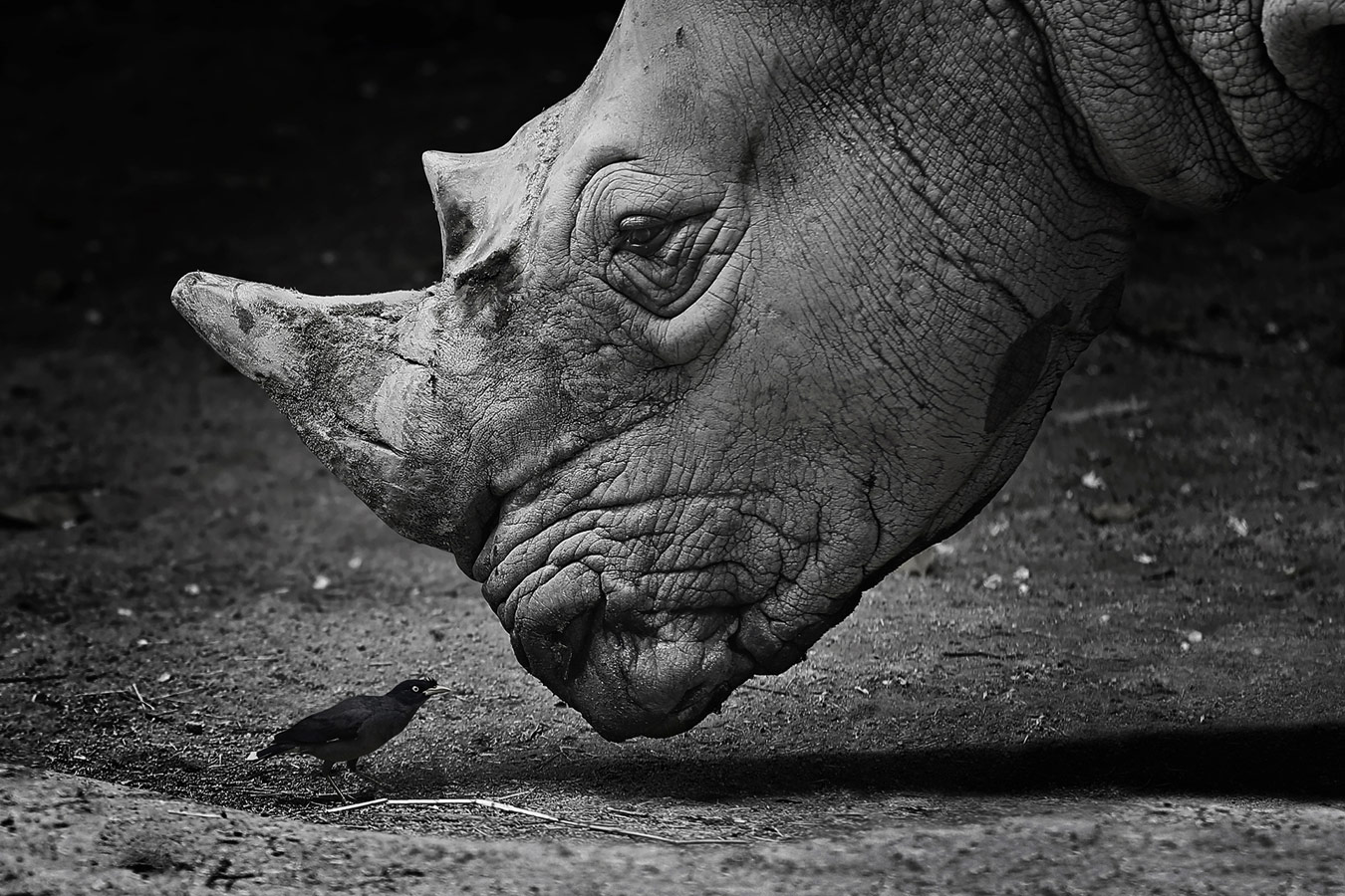 Dialog, © Alla Sokolova, France, Black and White Nomination, 1 place, 35AWARDS Photo Contest