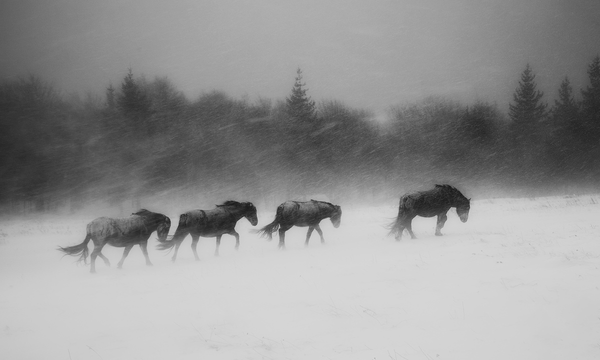 In the heart of the winter, © Ivan Miladinov, Bulgaria, Black and White Nomination, 2 place, 35AWARDS Photo Contest