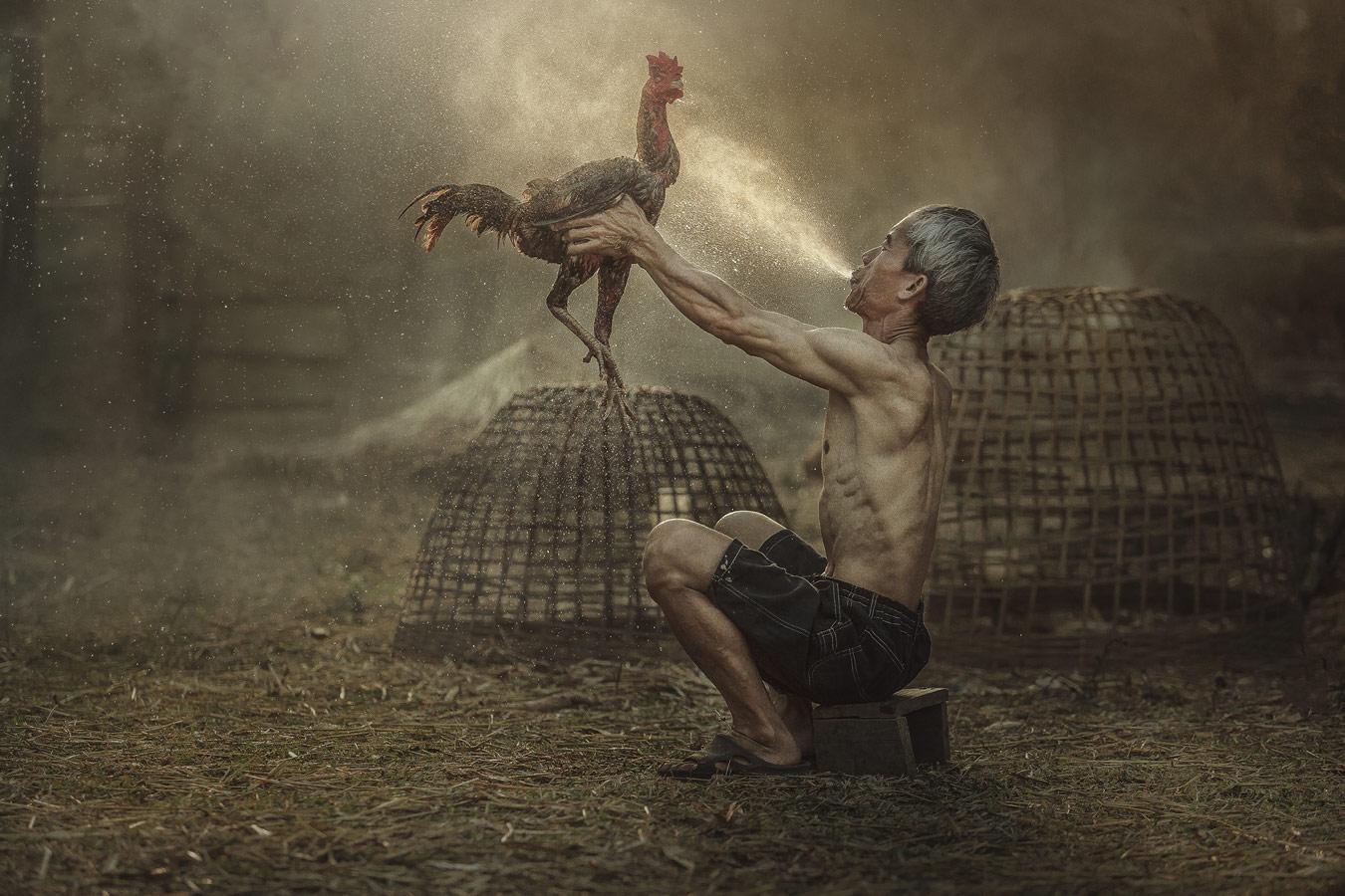 Man cleaning Thai gamecock, © Jakkree Thampitakkull, Thailand, Portrait Nomination, 2 place, 35AWARDS Photo Contest