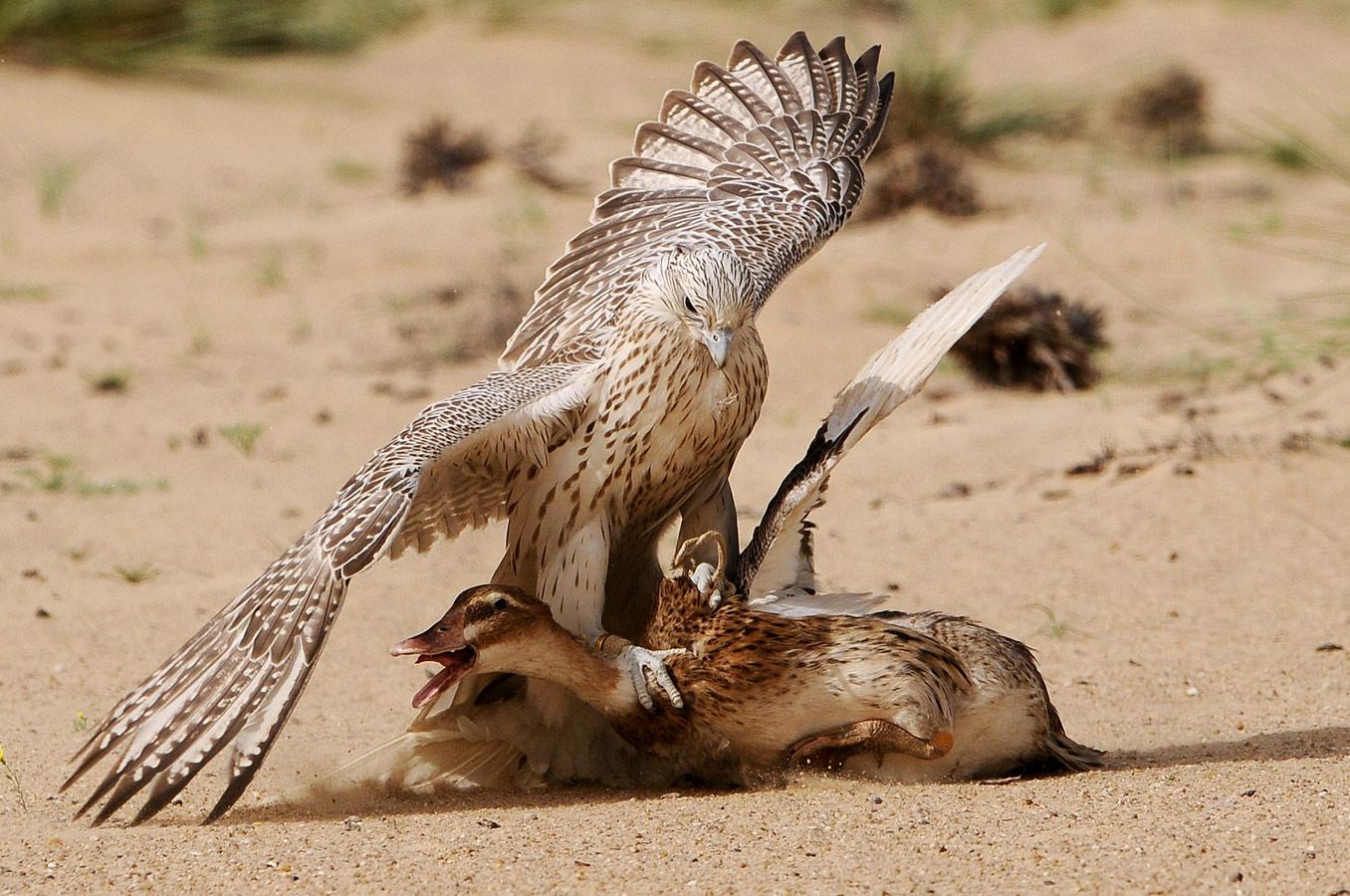 The bird wisdom, © Saad Alfarhan, Turkey, Wildlife Nomination, 3 place, 35AWARDS Photo Contest