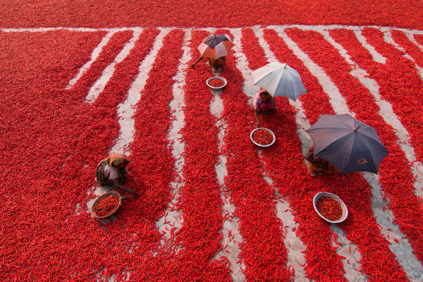 Red Chillies Pickers, © Azim Khan Ronnie, Bangladesh, Street photo Nomination, 1 place, 35AWARDS Photo Contest