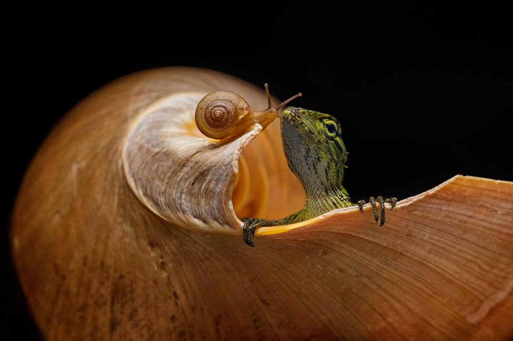 © Halil Andi, Indonesia, 1st Award Macro, 35AWARDS Photo Contest