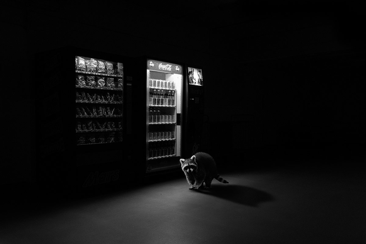 © Jason McGroarty, Ireland, Third Place Winner, All About Photo Awards