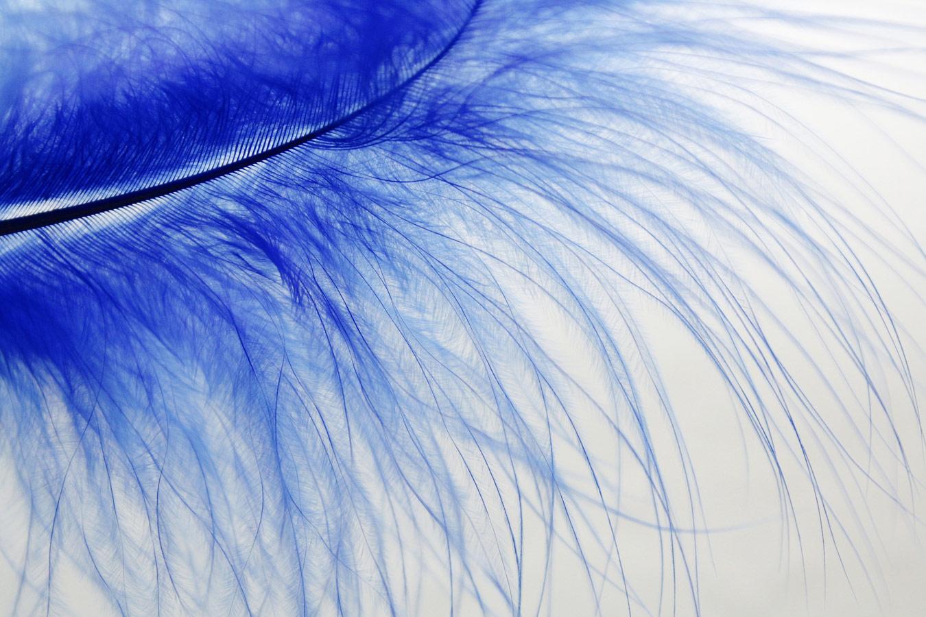 Blue Fine Art Grant