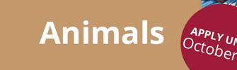Animals Call For Artists