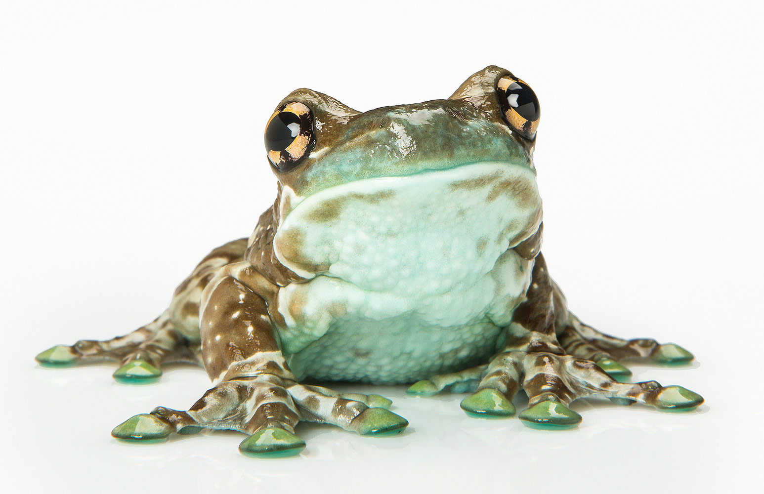 Amphibians - A Close Encounter, © George Kamper, Wilton Manors, United States, First Place Commissioned Work, Best Friends — Animal Photography Contest