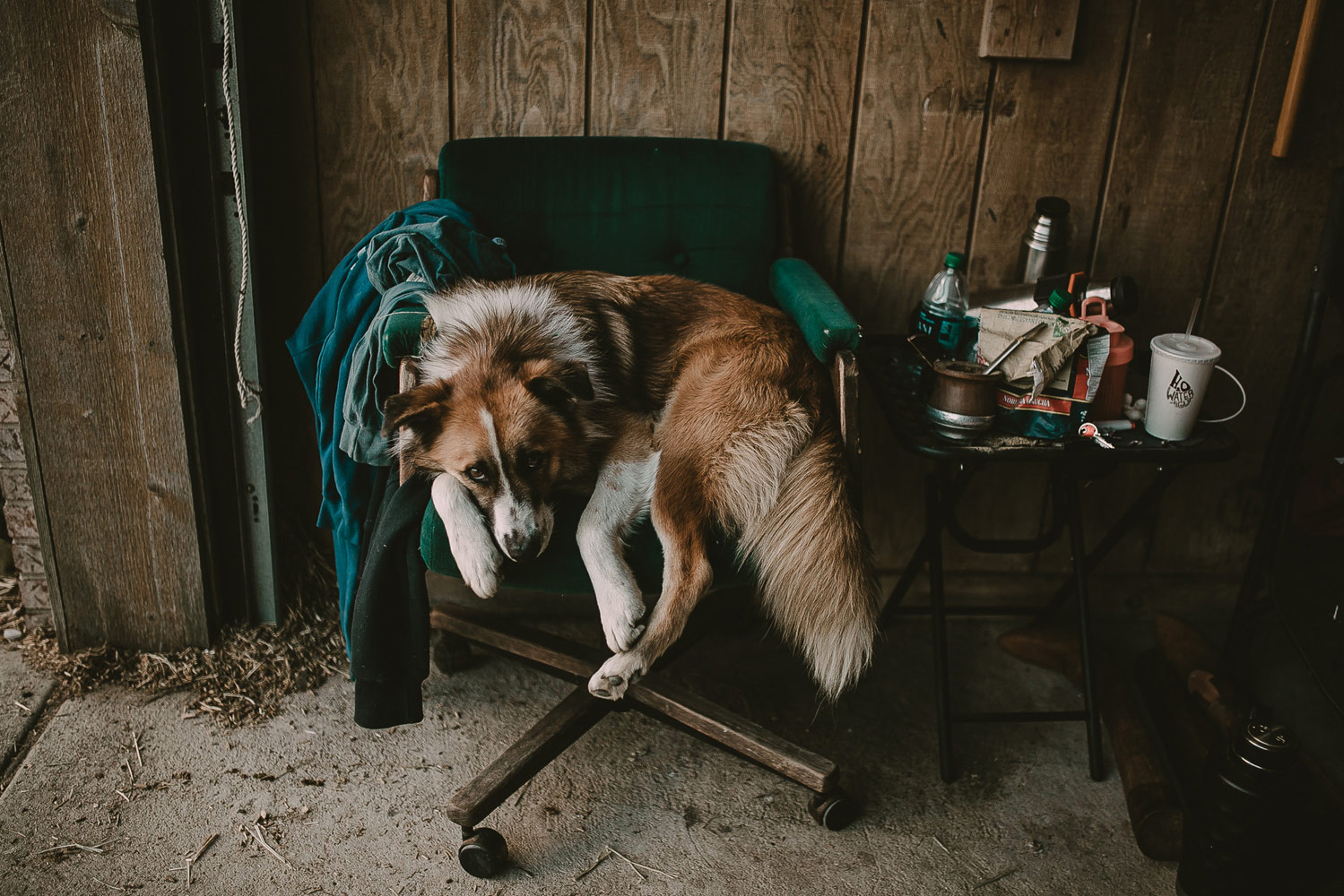 The Forbidden Chair, © Leah Lewis, Aurora, United States, Personal Work, Best Friends — Animal Photography Contest