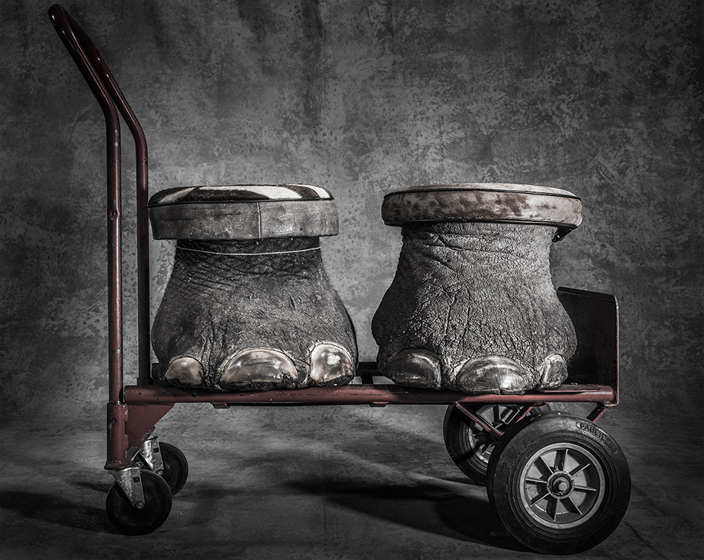 Confiscated, © Britta Jaschinski, England, UK, Grand Prize, BigPicture Natural World Photography Competition