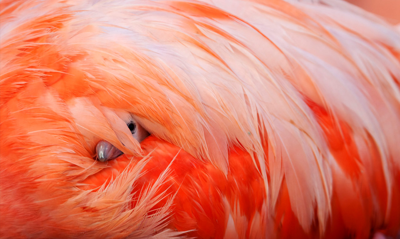 Peek of the Newborn, Ria Lagartos Biosphere Reserve, Yucatan Peninsula, Mexico, © Claudio Contreras, Mexico City, Mexico, Winged Life Category Winner, BigPicture Natural World Photography Competition