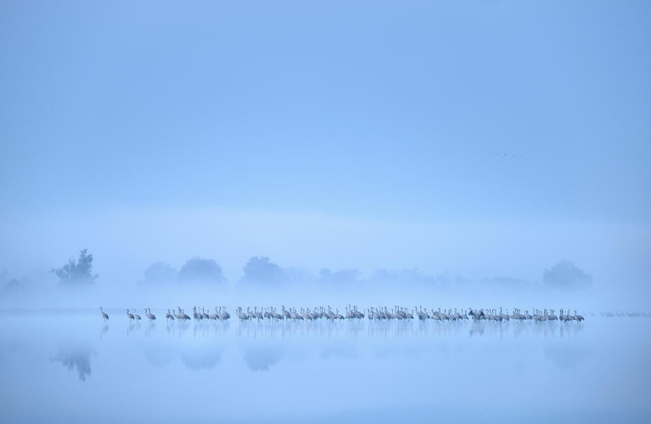 Crane flock misty lake, © Piotr Chara, Silver, Bird Photographer of the Year - BPOTY