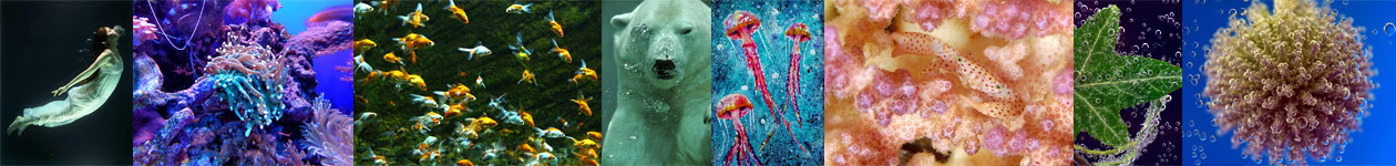 Water Photography Competition - Blank Wall Gallery