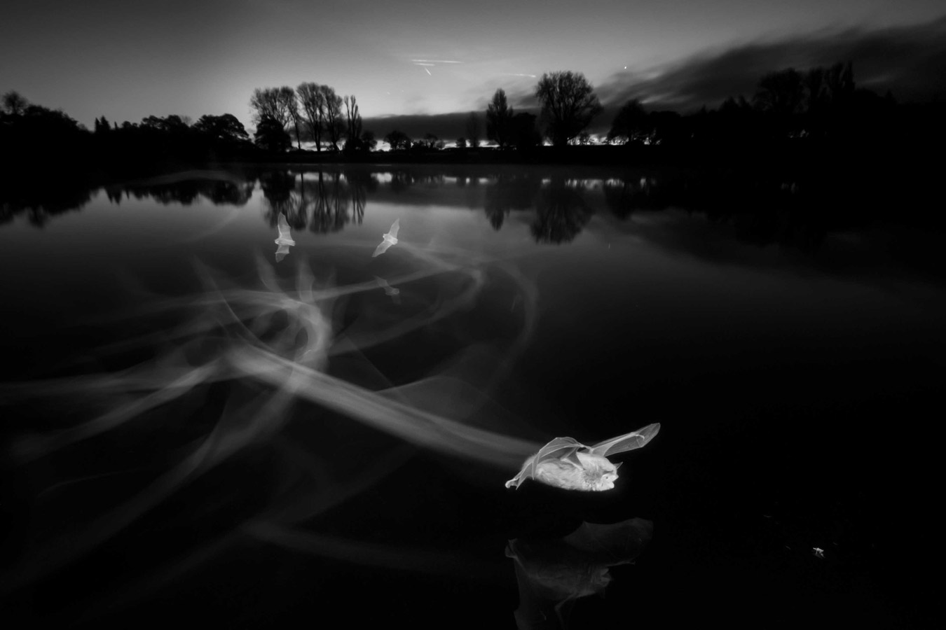 Contrails at Dawn, Coate Water Country Park, Swindon, © Paul Colley, Overall Winner, British Wildlife Photography Awards