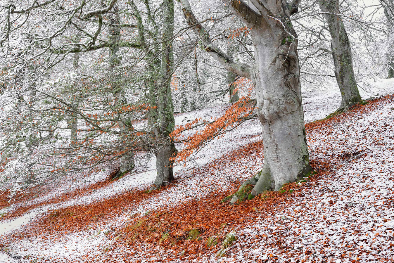 Seasonal Overlap. Aviemore, Highland, Scotland, © James Roddie, British Wildlife Photography Awards