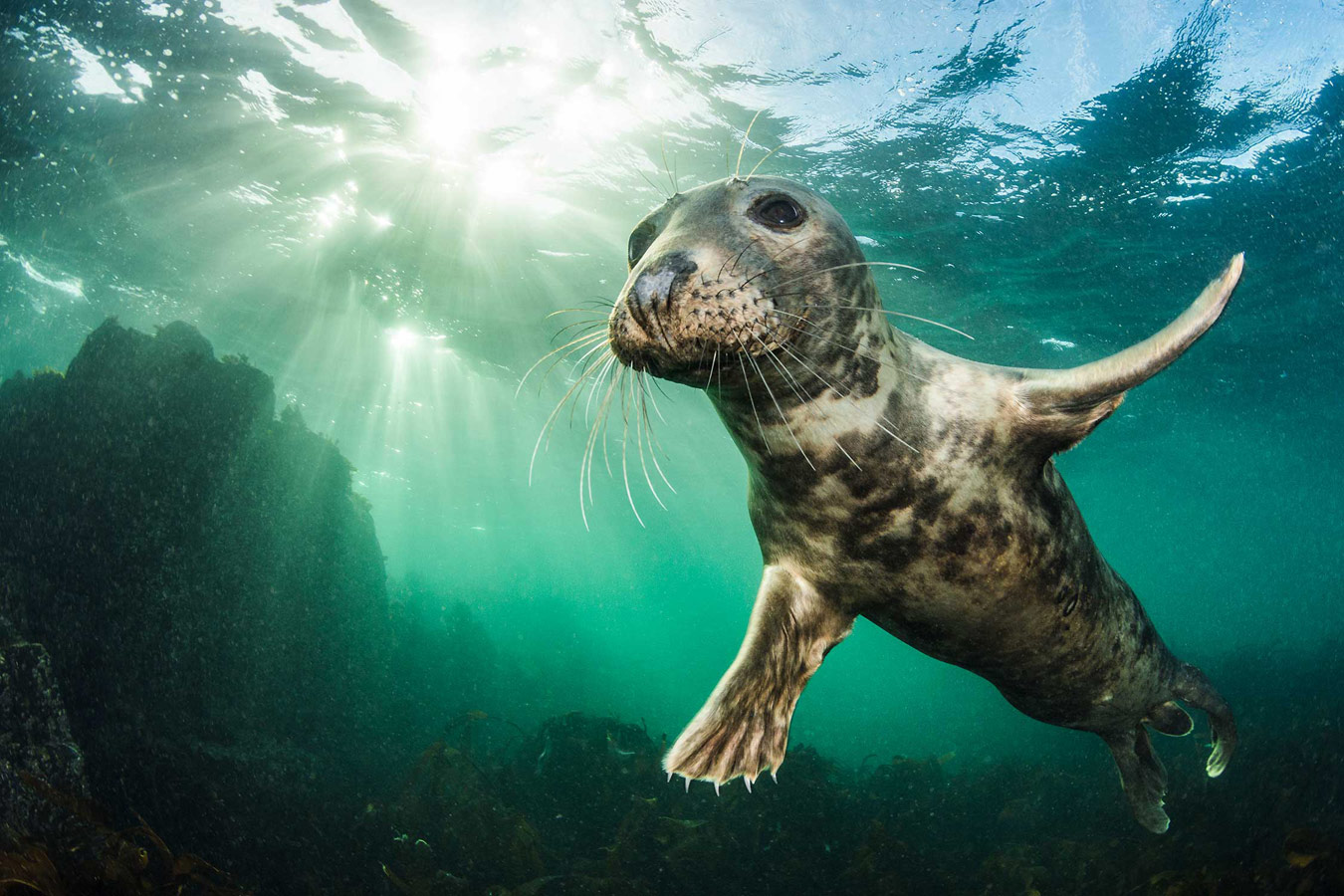Ta da! Farne Islands, Northumberland, UK, © Kirsty Andrews, British Wildlife Photography Awards