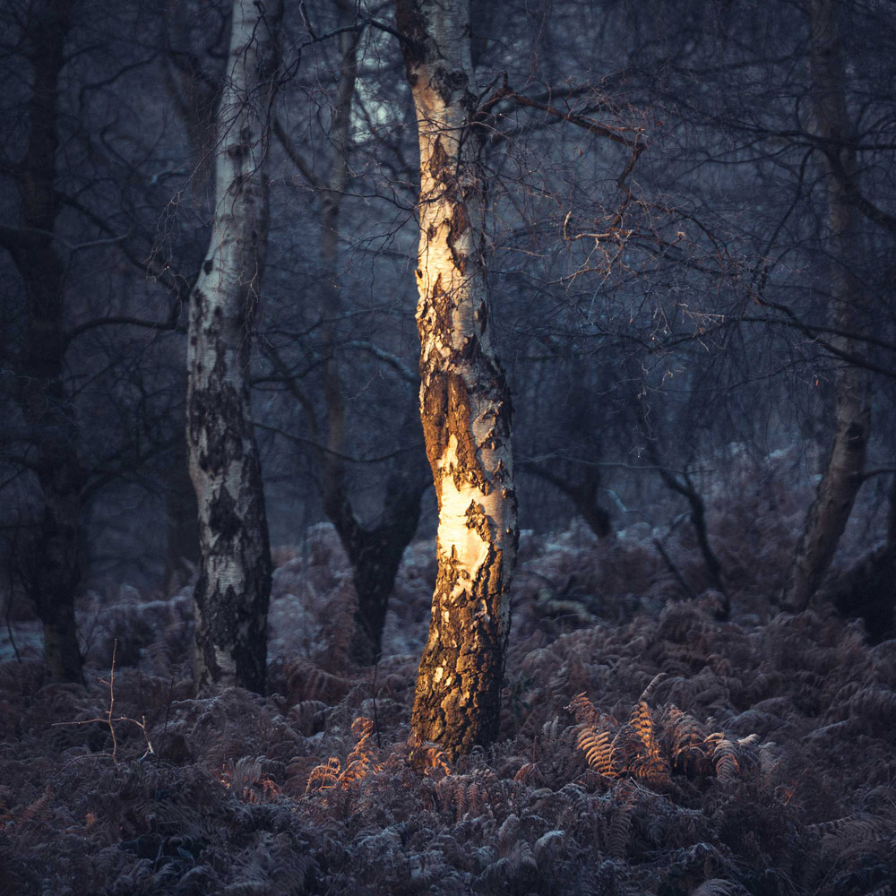 Spotlight. Sherwood Forest, Nottinghamshire, © Chris Dale, British Wildlife Photography Awards