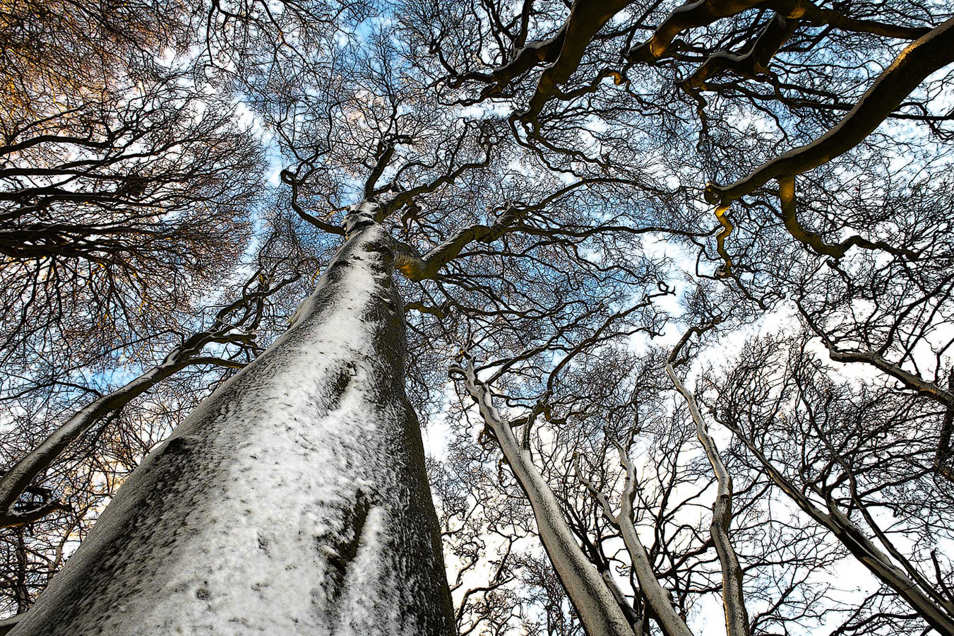 Beech in Winter. Hackpen Hill, Wiltshire, © Max More, British Wildlife Photography Awards