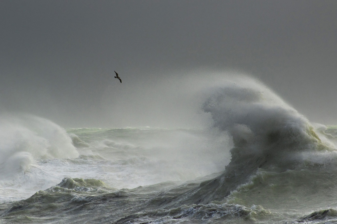 Storm Gull. Newhaven, East Sussex, © Craig Denford, British Wildlife Photography Awards