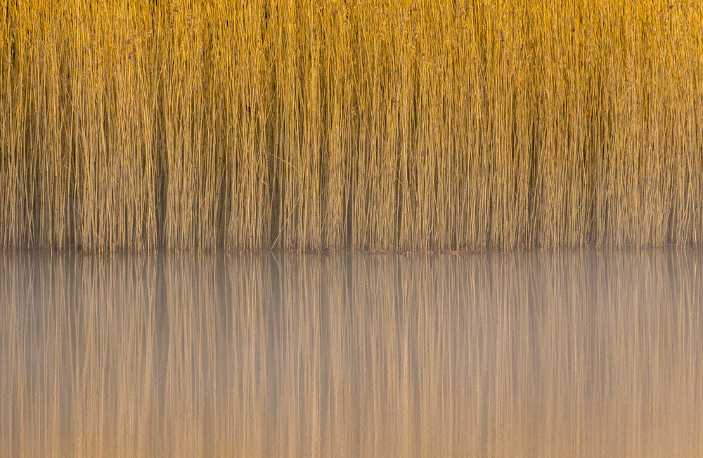 © Steve Palmer, Reeds, Lindow Common, SSSI, Wilmslow, Cheshire, Wiiner in category Botanical Britain, British Wildlife Photography Awards 2017