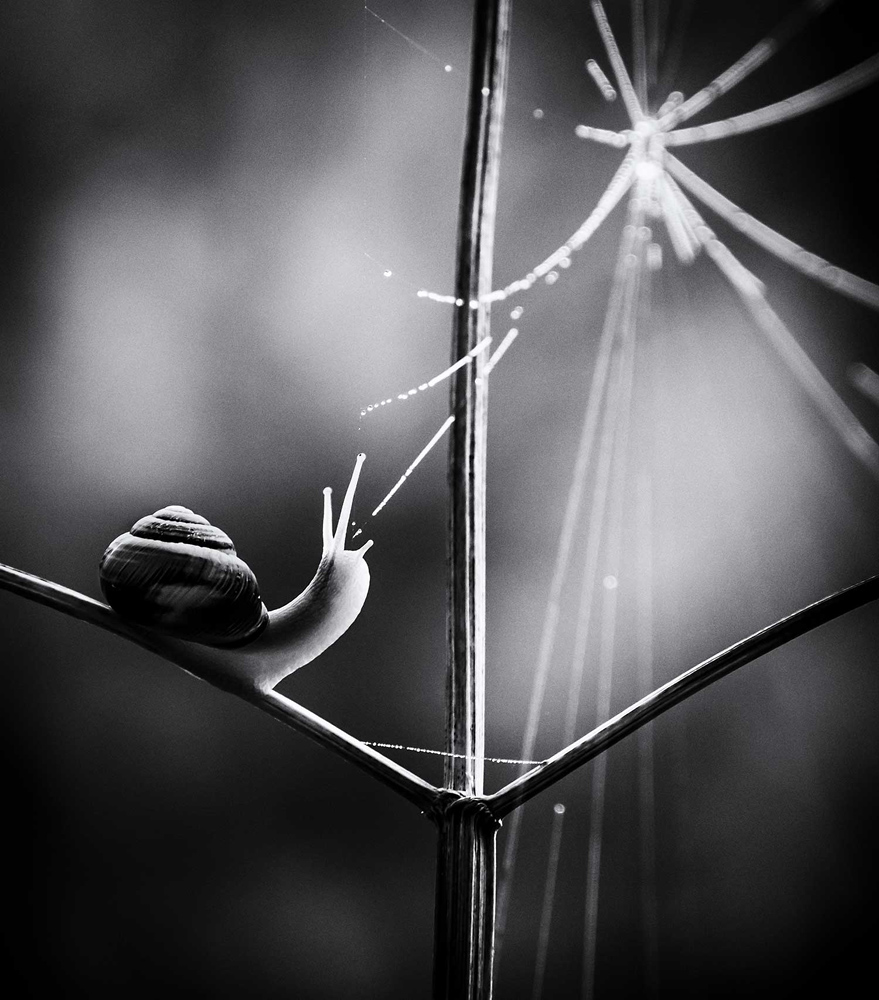 © Paula Cooper, Web of life, Thetford Forest, Norfolk, Wiiner in category British Nature in Black and White, British Wildlife Photography Awards 2017