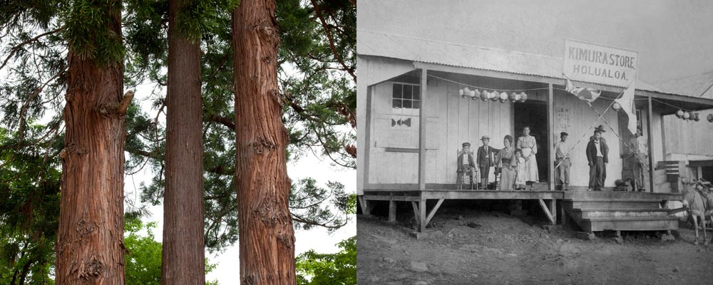 """Three trees in Aizu Wakamatsu (left), Kimura store in Holualoa (right), 2015"". Project: Echo, © Kevin J. Miyazaki, Milwaukee, WI, Center — Review Santa Fe 2017"