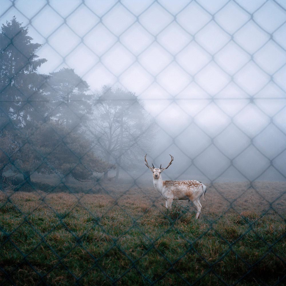 """Deer"". Project: Shelter, © Maëlle Collin, New York City, NY, Center — Review Santa Fe 2017"