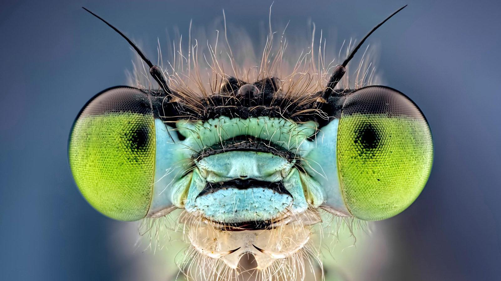 Bud Eyed, © Keith, Wildlife Category Expert Winner, CEPIC Stock Photography Awards