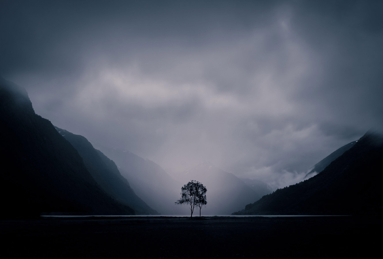 Tree, © Pavla Baťková, Nature, CEWE Photo Award