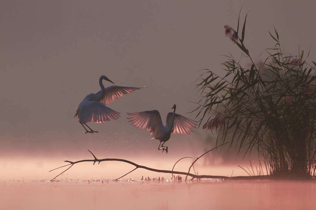 Magical Morning, © Grzegorz Zimny, Animals, CEWE Photo Award