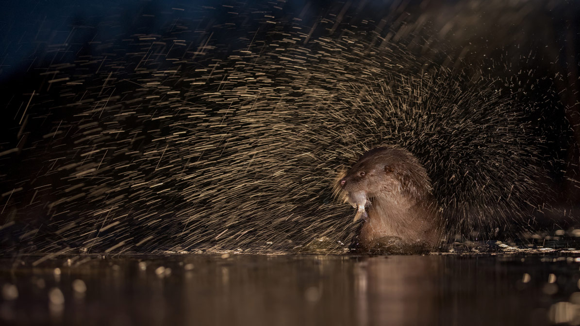 © Thomas Hinsche, Animals, CEWE Photo Award