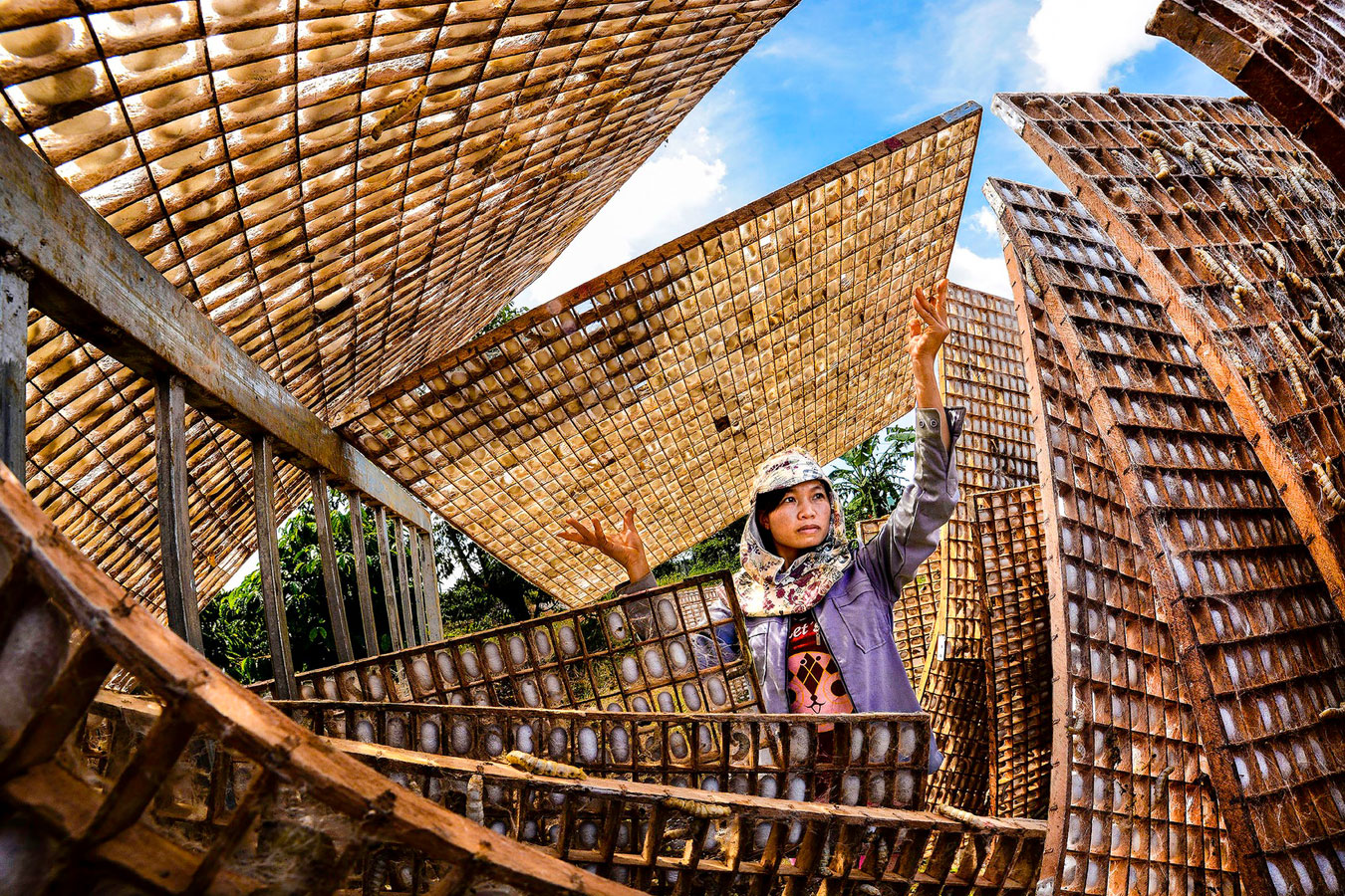 Cocoon Exposing, © Tran Van Tuy, Vietnam, Honorable Mentions, CGAP Photo and Video Contest