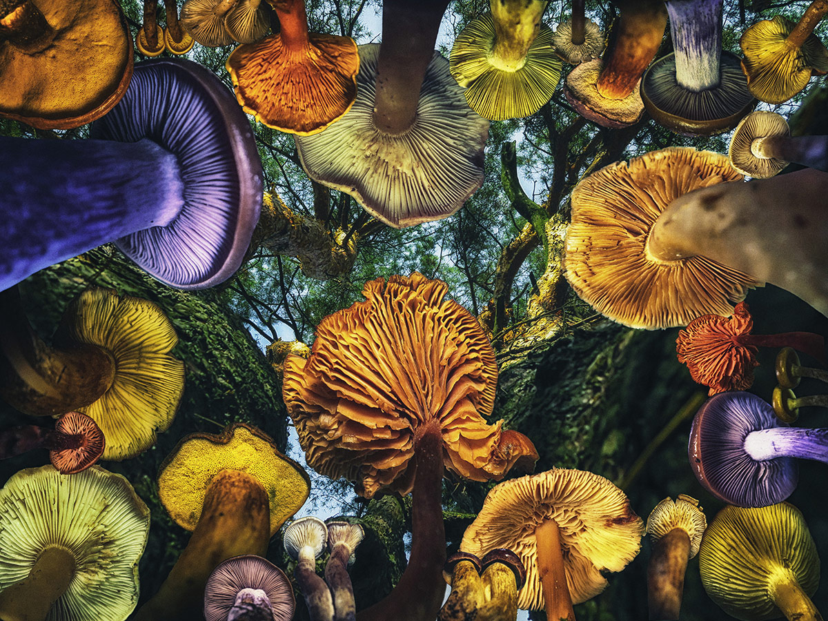 When Mushrooms Were Big, © Oksana Moroziuk, Russian Federation, 1st Place Photomanipulation Professional, Chromatic Photography Awards