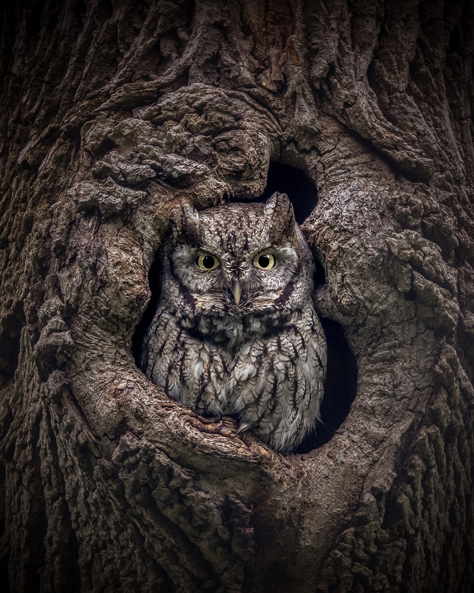 Glimpse, © Jonathan Elcock, United States, 1st Place Wildlife and Animals Amateur, Chromatic Photography Awards