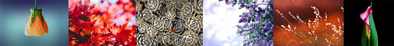 Botanicals Call for Entry - Colors of Humanity Art Gallery