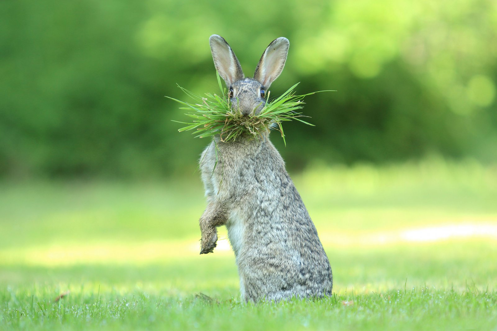 """Eh What's Up Doc?"", © Olivier Colle, Highly Commended, Comedy Wildlife Photography Awards"