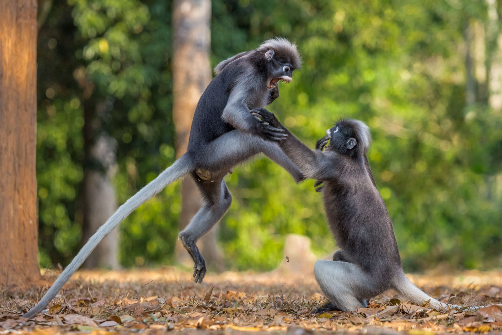 This Is Sparta, © Sergey Savvi, Highly Commended, Comedy Wildlife Photography Awards