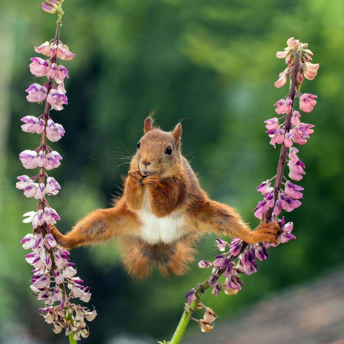 Splits, © Geert Weggen, Highly Commended, Comedy Wildlife Photography Awards