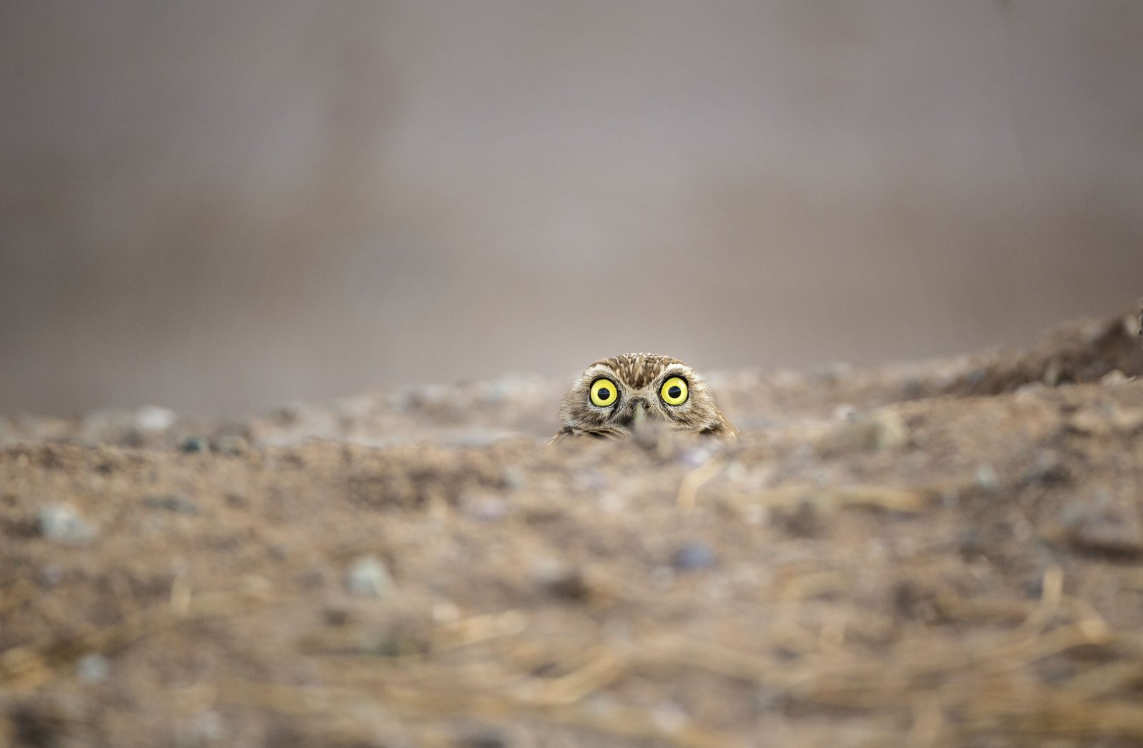 Peek-a-boo, © Shane Keena, Spectrum Photo Creatures in the Air Category Winner, Comedy Wildlife Photography Awards
