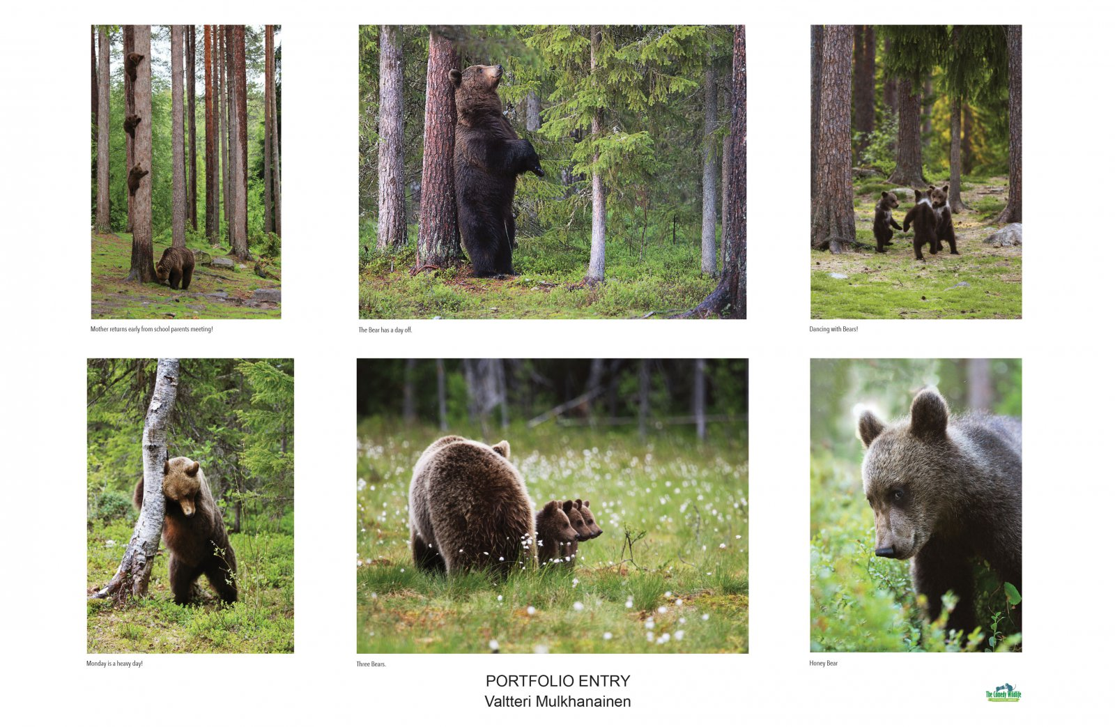 Collection of Bear Studies, © Valtteri Mulkahainen, Amazing Internet Portfolio Award, Comedy Wildlife Photography Awards