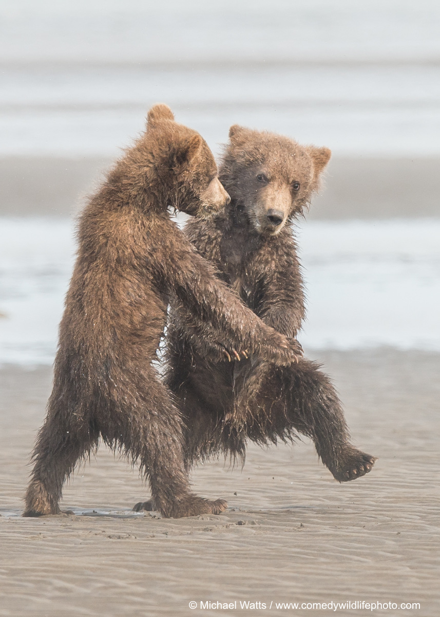 Tango, © Michael Watts, Highly Commended, Comedy Wildlife Photography Awards