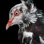 The New York Pigeon (Behind the Feathers), Photography / Books / Entertainment, Communication Arts Photography Competition