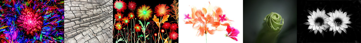 All Botanical Art Competition
