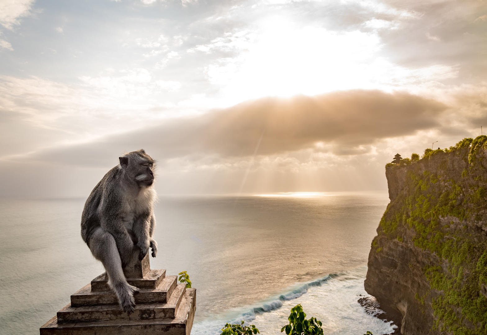 Uluwatu Monkey, © Josh Hinds, Digital Camera Young Photographer of the Year 2018, Digital Camera Photographer of the Year
