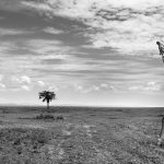 © Anup Shah, Kenya, The Mara, Third Place