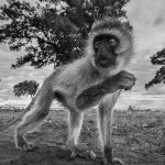 © Anup Shah, Kenya, The Mara, Third Place