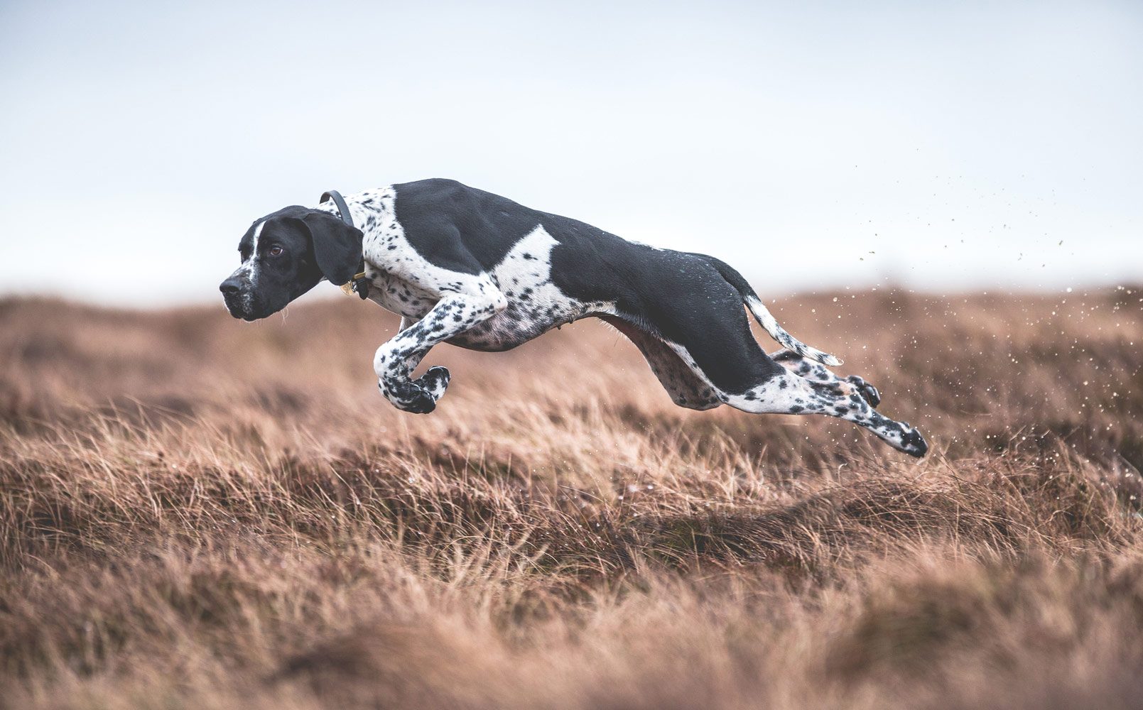 On the Move, © Sarah Caldecott, UK, Dogs at Work 1st Place Winner, Dog Photographer of the Year