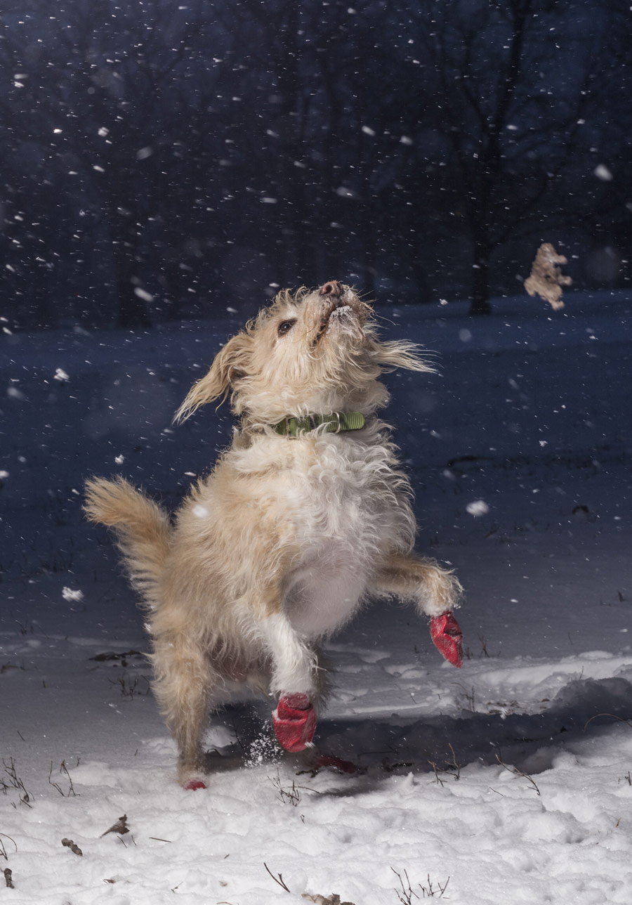 Jumping for Joy, © Julian Gottfried, USA, I Love Dogs Because… (Ages 11 to 17) 1st Place Winner, Dog Photographer of the Year