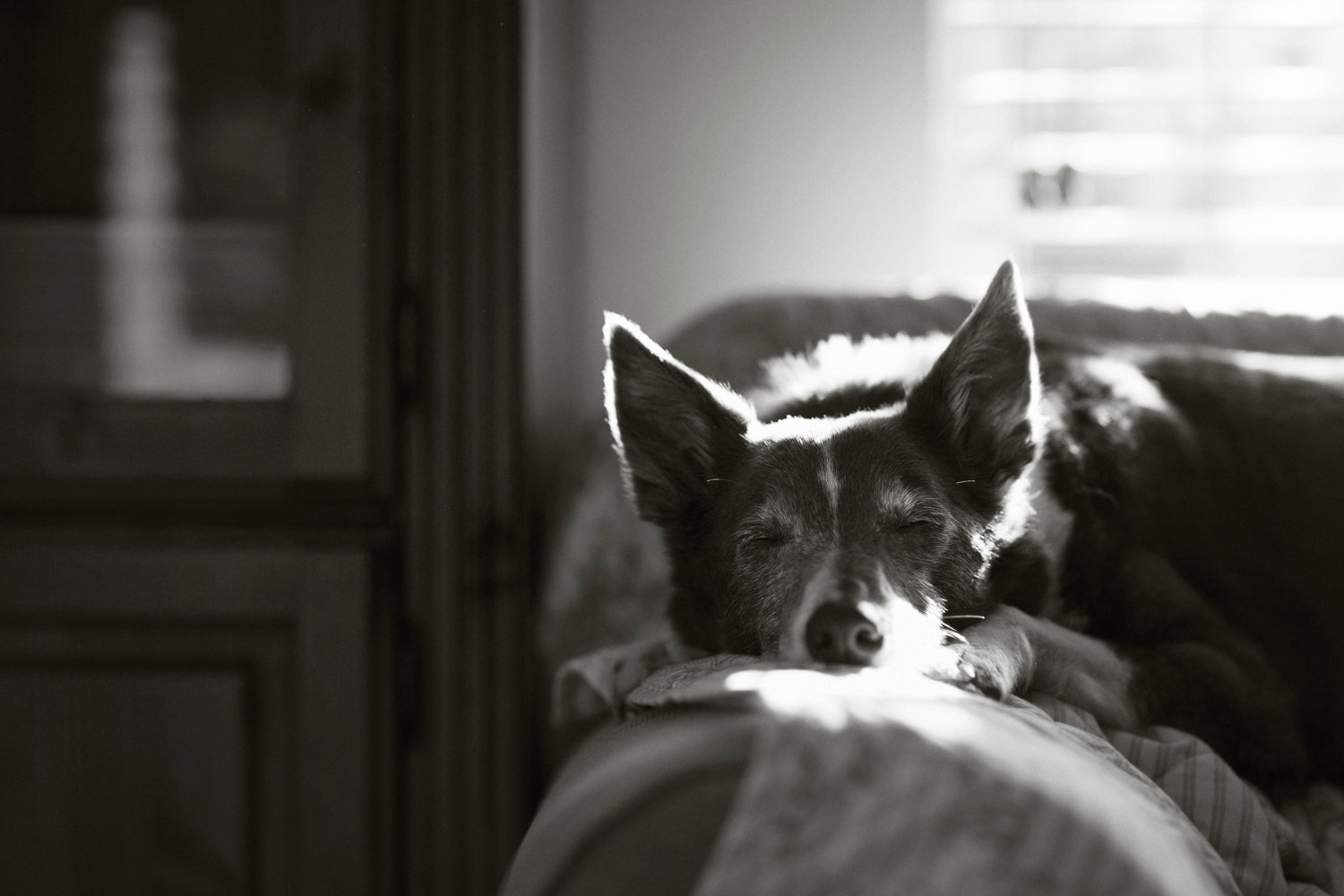 Kelly in her spot, © John Liot, UK, Oldies Category 1st Place Winner, Dog Photographer of the Year