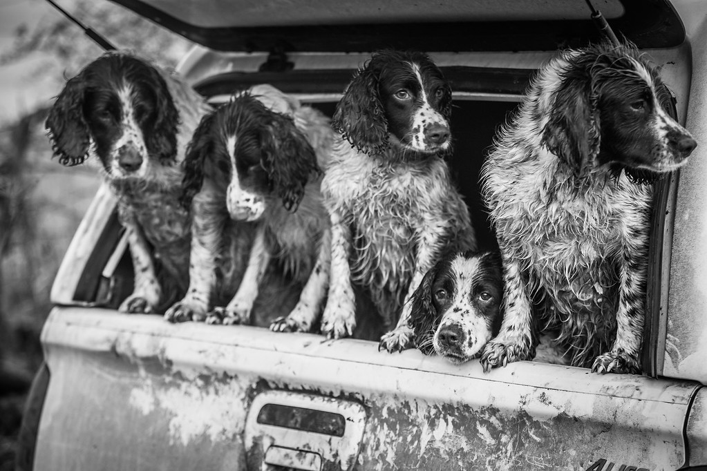 All Picked Up, © Lucy Charman, UK, Dogs at Work 2nd Place Winner, Dog Photographer of the Year