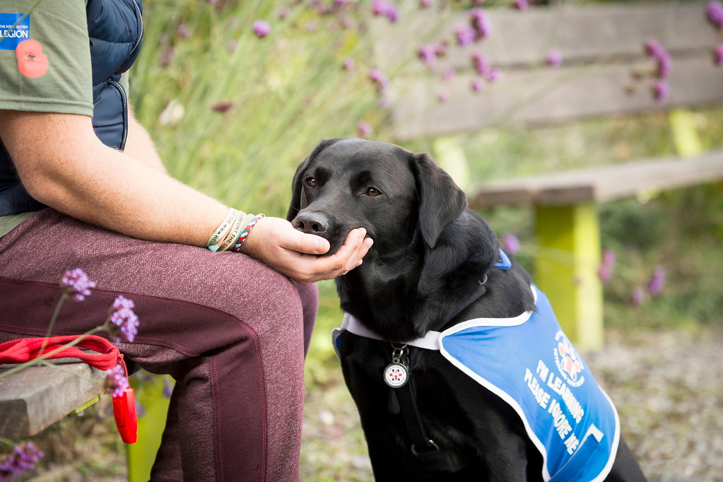 I'm here for you, © Julie Morrish, UK, Assistance Dogs Charity Category 3rd Place Winner, Dog Photographer of the Year