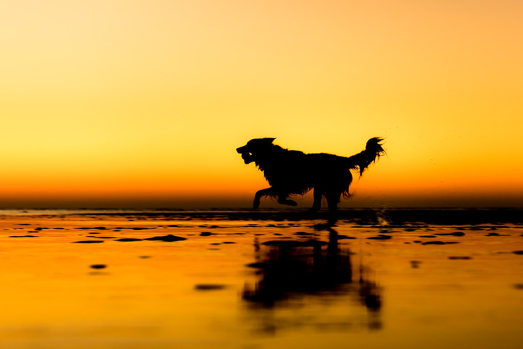 Free Spirit, © Martin Tosh, UK, Rescue Dogs Charity Category 2nd Place Winner, Dog Photographer of the Year